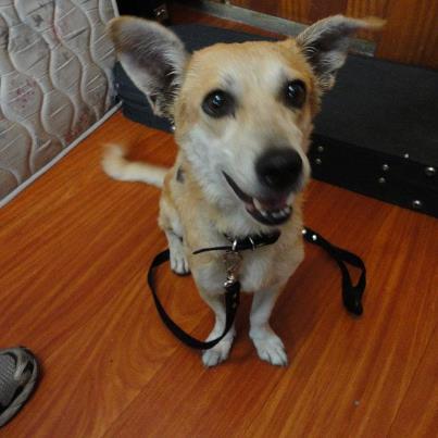 Animais que precisam de ajuda (2)