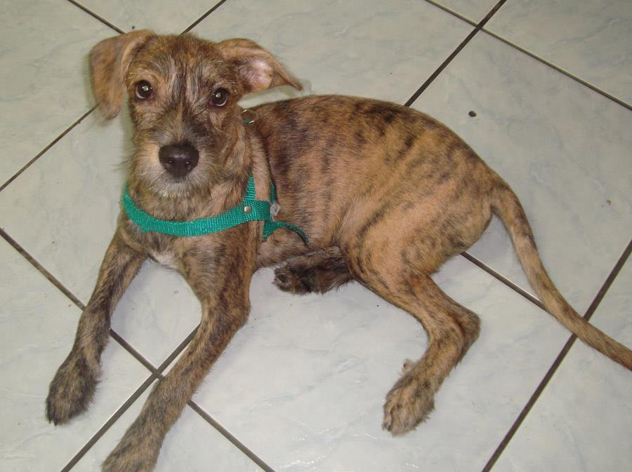 Animais que precisam de ajuda (4)