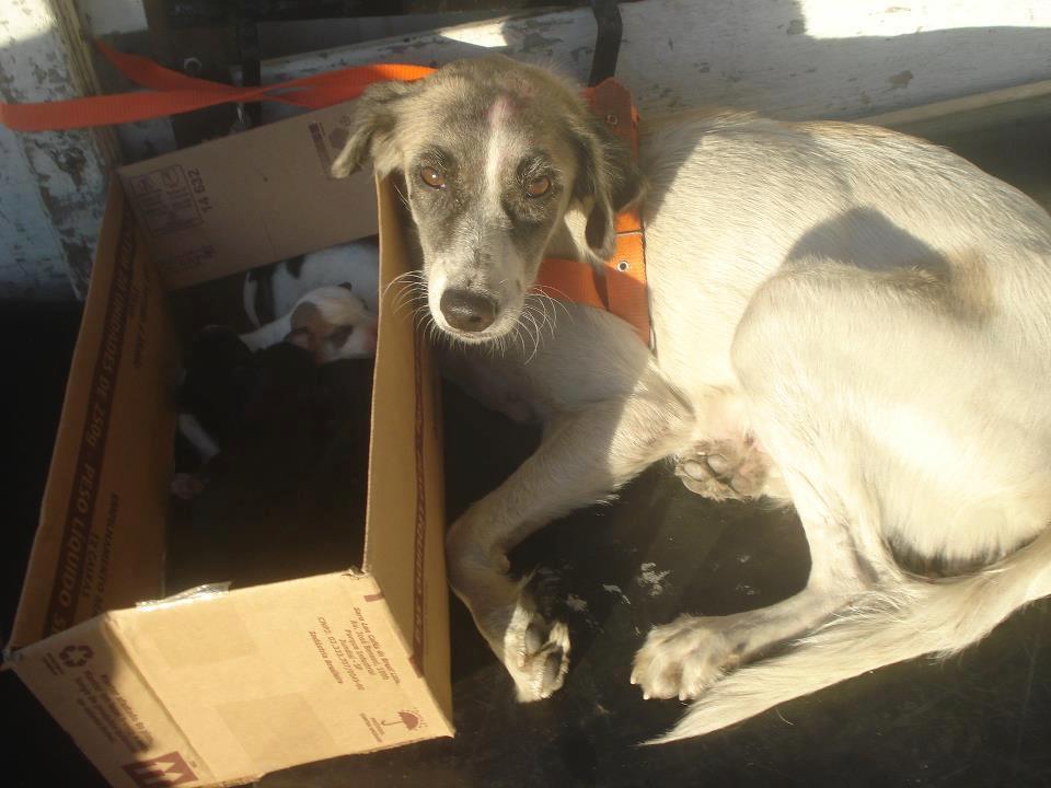 Animais que precisam de ajuda (5)