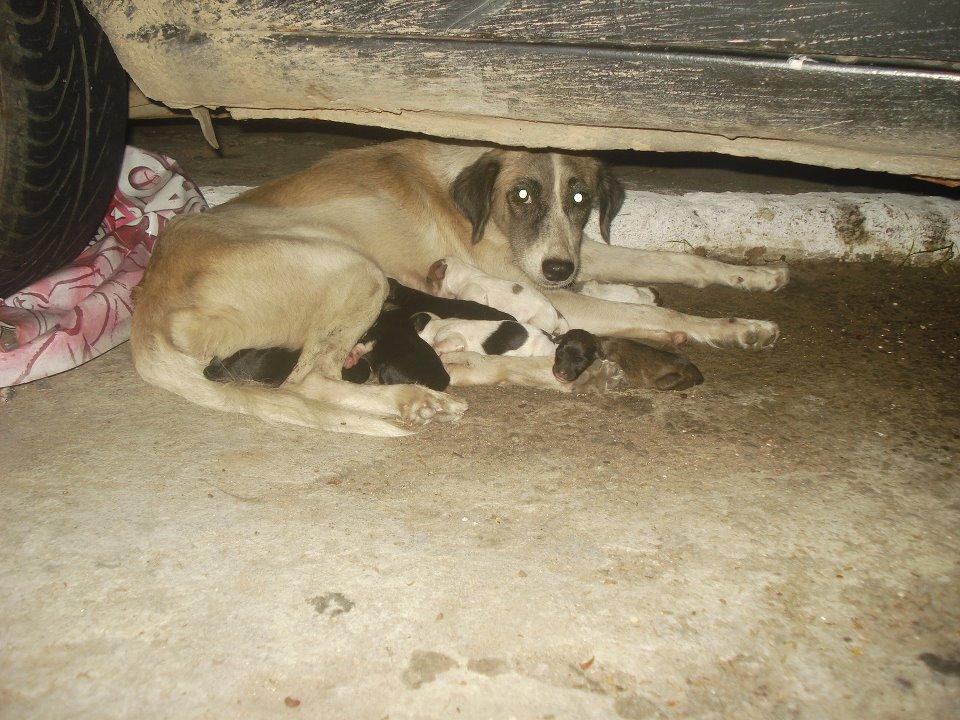 Animais que precisam de ajuda (7)