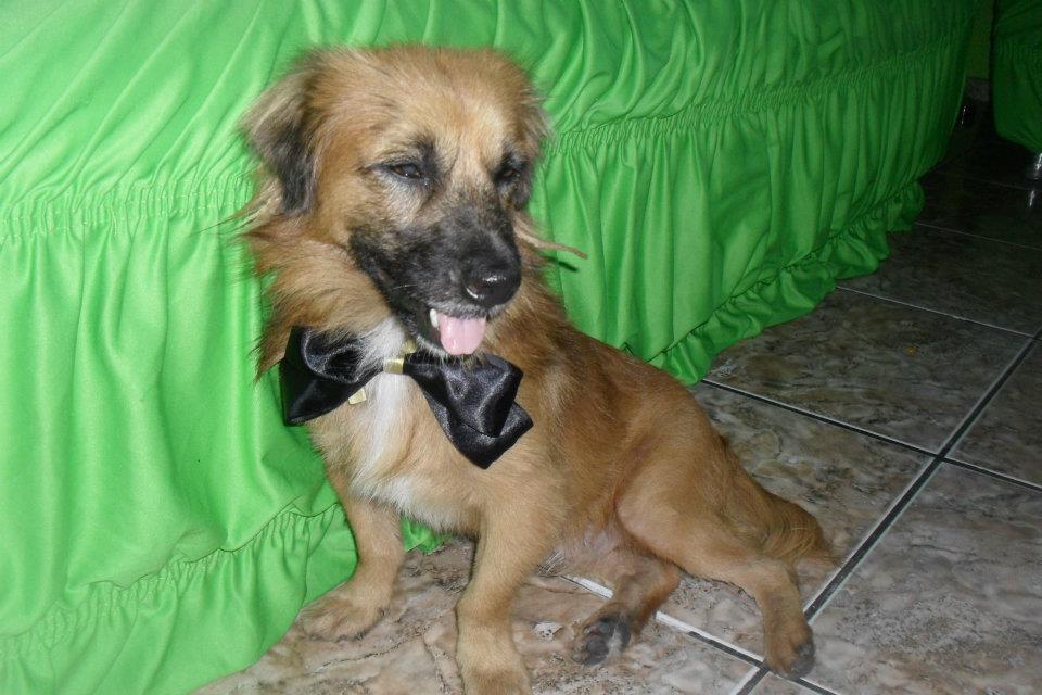 Animais que precisam de ajuda (10)