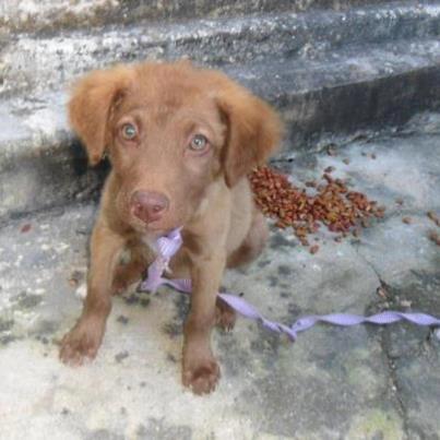 Animais que precisam de ajuda (19)