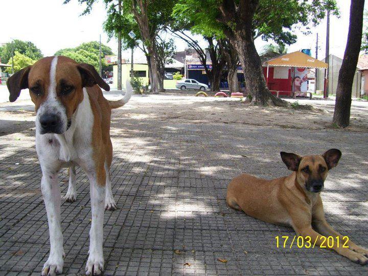 Animais que precisam de ajuda (26)