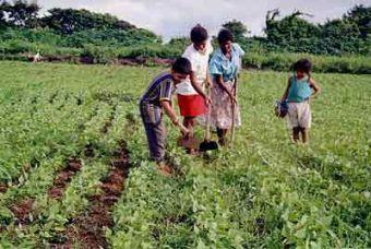 O Plano Safra 2012-2013 da agricultura familiar no Ceará será lançado, nesta segunda-feira (20), pelo Governo do Estado