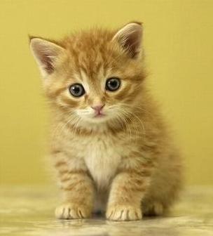 Os gatos inseridos no Movimento SOS Gatos de Fortaleza serão castrados na próxima segunda-feira (16)