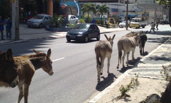 """""""Cuidado! Animais na pista"""". A placa de advertência poucas vezes é percebida por motoristas nas estradas."""