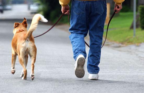 Uma caminhada diferente vai ser realizada na orla de Fortaleza. Um grupo de pessoas se reúne na Praia de Iracema, neste domingo (13), a partir das 17h, para promover uma caminhada com seus amigos caninos.
