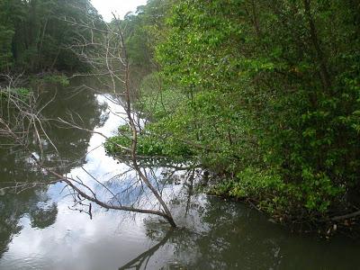 O Parque do Cocó recebe operação de limpeza a partir desta segunda-feira (14).