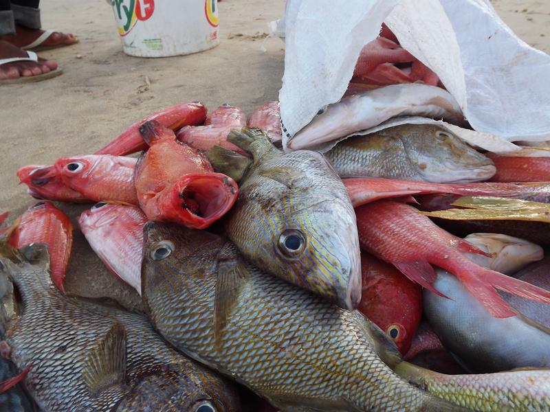 O Mercado Provisório dos Peixes será entregue na tarde desta segunda-feira (20), a partir das 17h, na Beira-Mar.