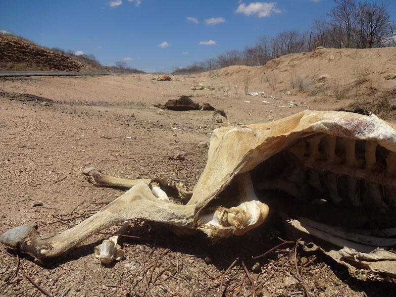 Ceará vive a pior seca dos últimos 50 anos