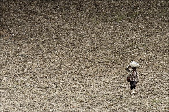 O impacto da falta de chuvas na pecuária foi menor do que na agricultura (FOTO: Otávio Nogueira/Flickr Creative Commons)