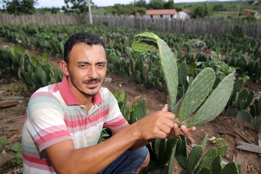 Palma forrageira se torna alternativa para enfrentar efeitos da estiagem (FOTO: Rômulo Serpa/MDA)