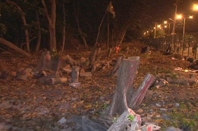 Árvores cortadas no Parque do Cocó (FOTO: Reprodução/TV Jangadeiro)