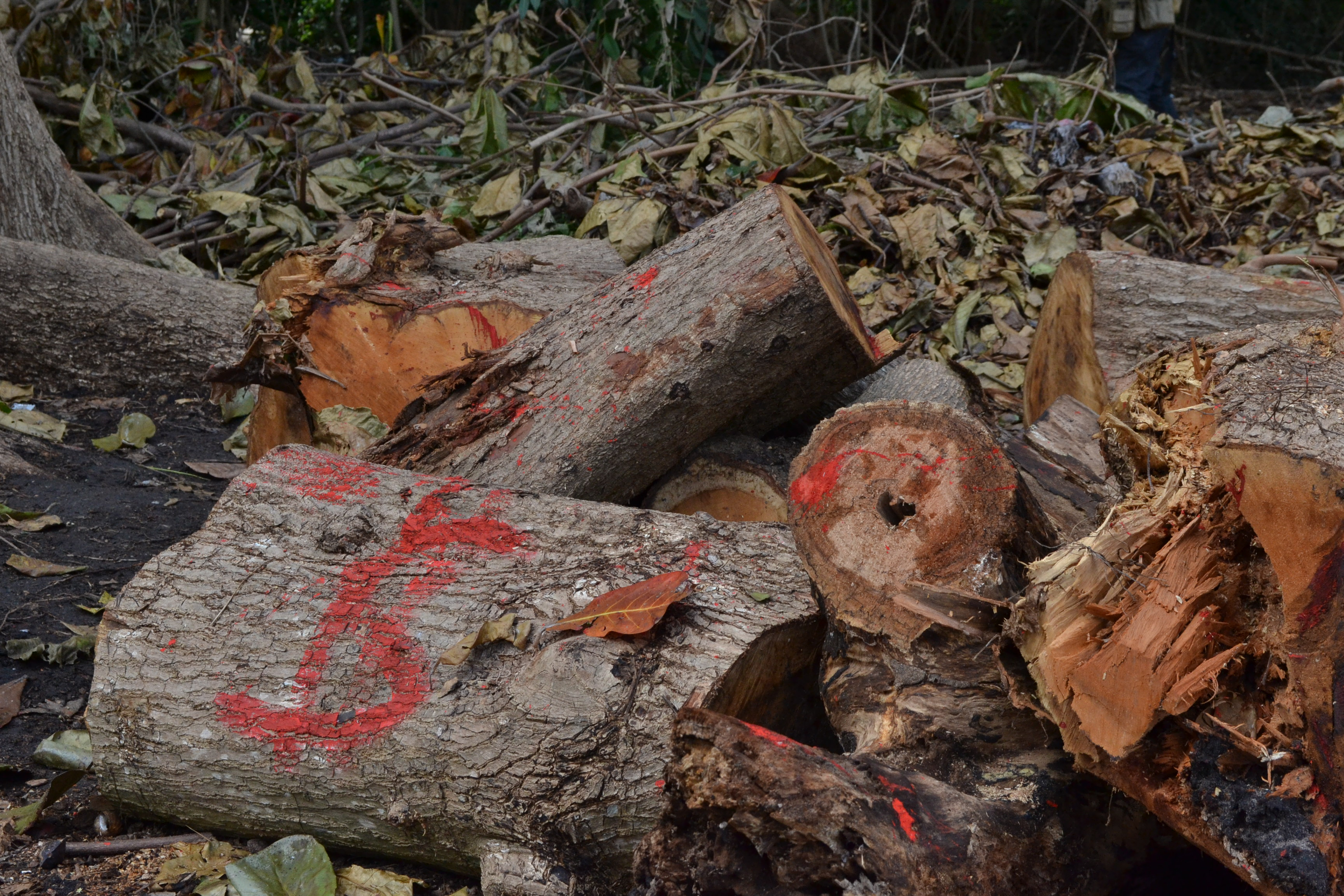 MPF constata, por meio de estudo, que o desmatamento no Cocó foi maior que o previsto