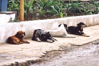 Um projeto de Lei pretende instalar programa municipal de proteção e bem-estar de cães e gatos em Fortaleza.
