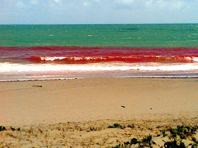Proliferação de microalgas altera a coloração do mar na Barra do Ceará (FOTO: Internet)