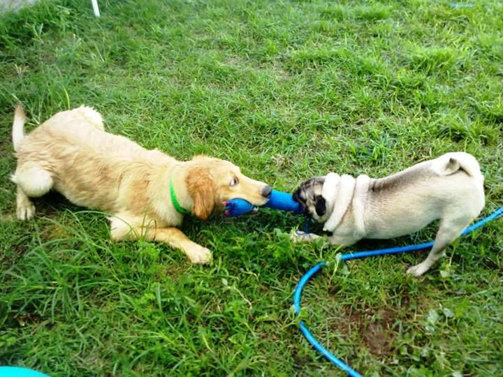 A prática de atividades recreativas é uma das principais atividades nos hotéis para cães.