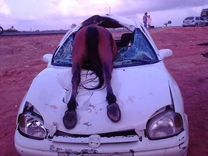 A colisão deixou o motorista ferido e o burro foi parar dentro do carro, quebrando o vidro da parte frontal (FOTO: Portal Alto Santo)