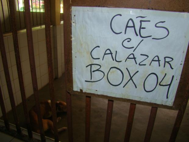 Visita surpresa ao CCZ flagra abandono de animais. (FOTO: OAB-CE)
