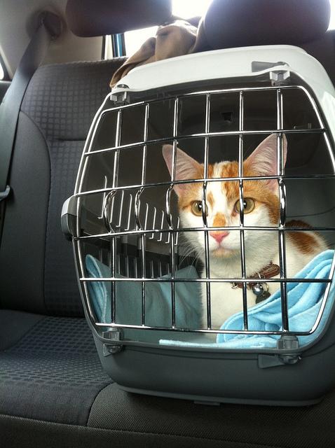 Confira qual o jeito CERTO e ERRADO de transportar seu animal