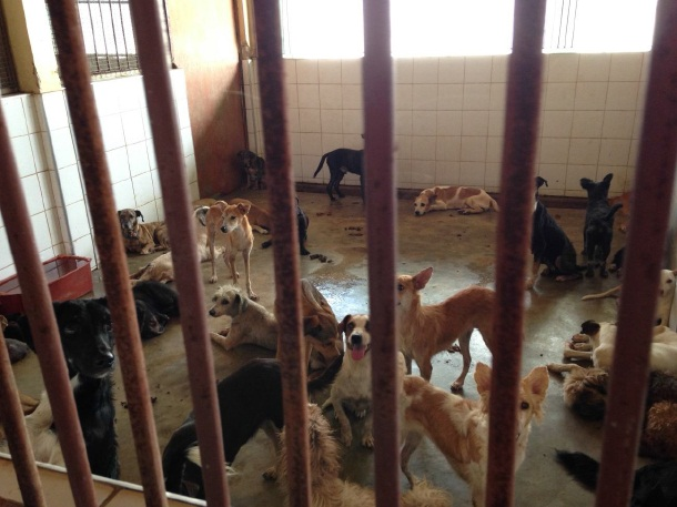 Visita surpresa ao CCZ flagra abandono de animais