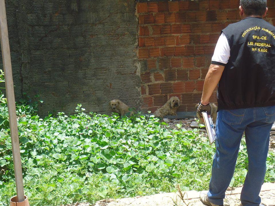 Resgate de animais pela SPA