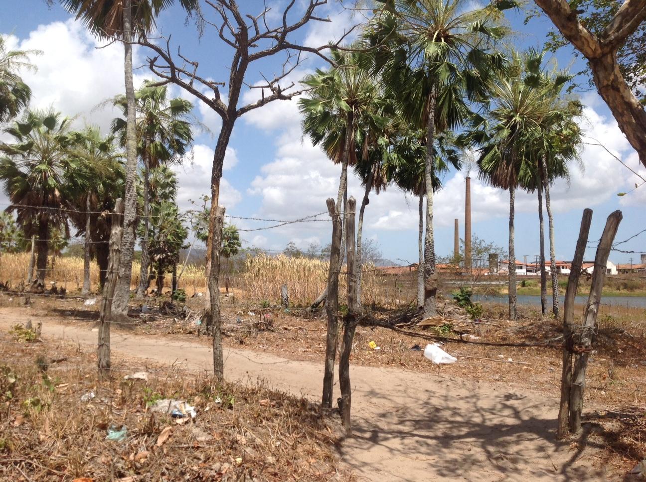A comunidade Tapeba possui várias plantações (FOTO: Lucas Catrib)