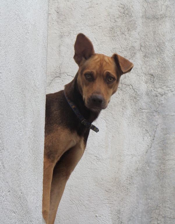 Animais podem ter atendimento veterinário gratuito (FOTO: Flickr/Creative Commons/Cláudio Rúbio)