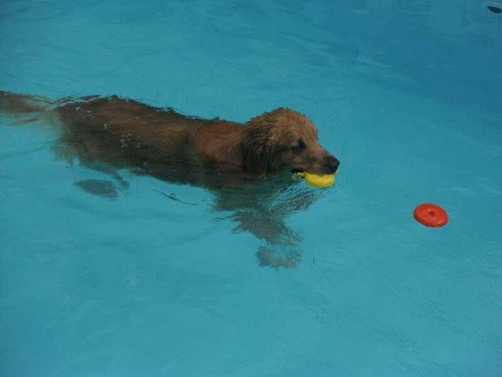Os hotéis oferecem café da manhã, esteira, piscina e recreação. (FOTO: Malha Cão Pet Club)
