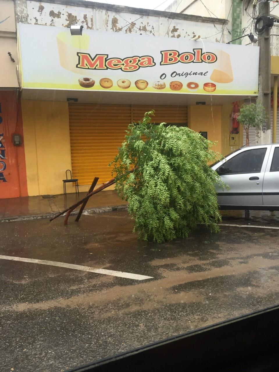 Ventania forte causa estragos em Limoeiro (FOTO: Reprodução)