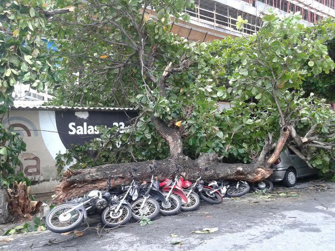 Motocicletas estavam estacionadas na via onde a árvore caiu (FOTO: Jonael Pontes)