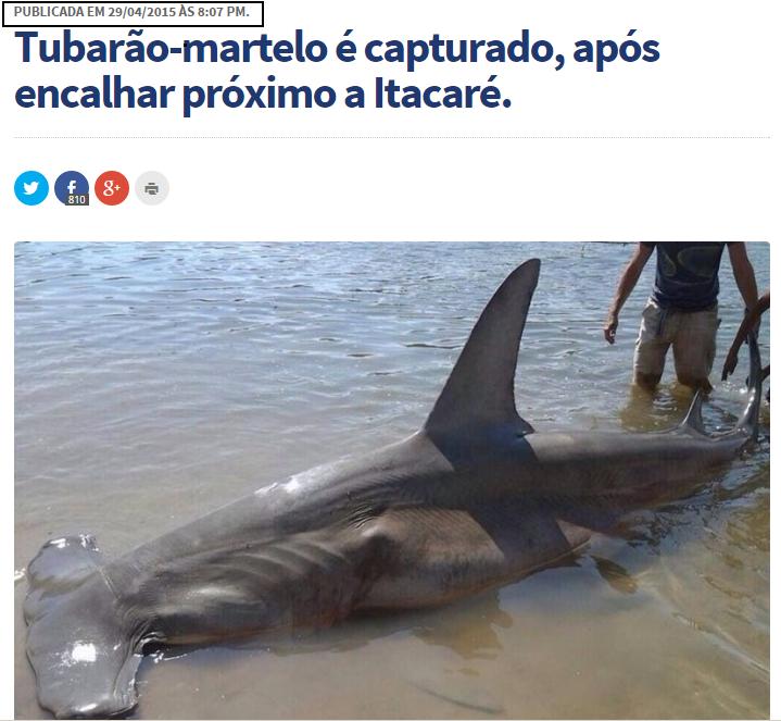 Foto de tubarão-martelo encalhado repercute nas redes sociais de fortalezenses (FOTO: Reprodução Itacaré Urgente)