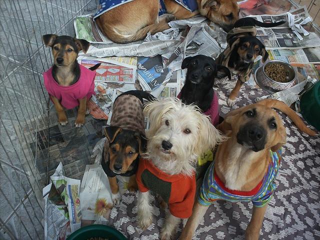 Apesar de possuir mais cães, o Ceará está apenas na 23ª entre os estados com maior taxa de animais desta espécie nas casas (FOTO: Divulgação)