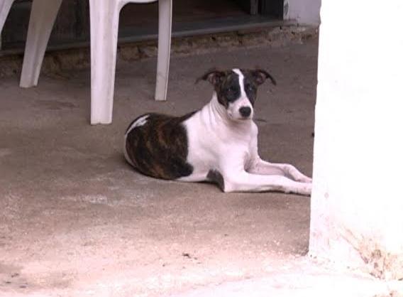 Bebê é encontrado por cachorro