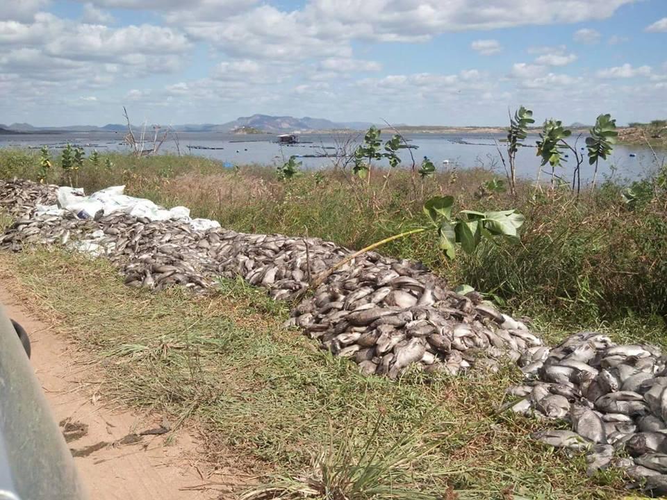 Pilhas de peixes mortos chocaram população (FOTO: Reprodução/Facebook)