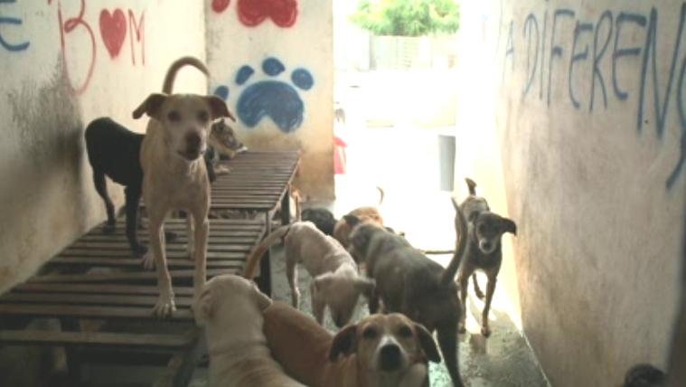 ONG atua em Fortaleza desde 1993 (FOTO: Reprodução/TV Jangadeiro)