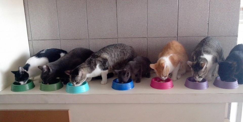 Hora de comer (FOTO: Reprodução Facebook)