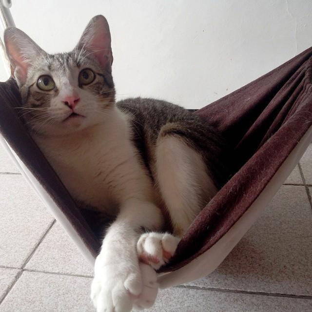Hotel para gatos