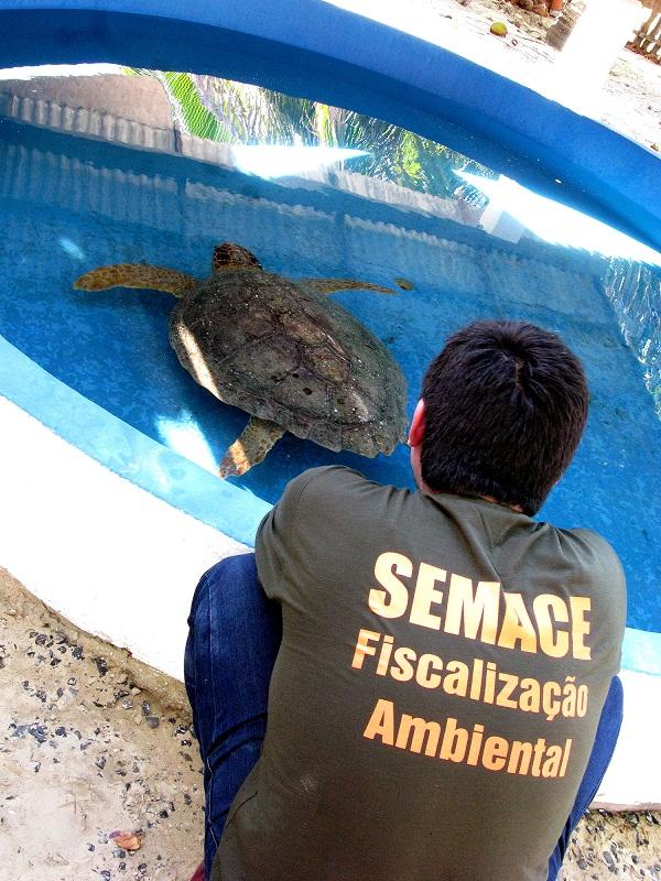 Os animais, encontrados com diferentes traumatismos e debilidades, sobreviveram (FOTO: Divulgação/Semace)