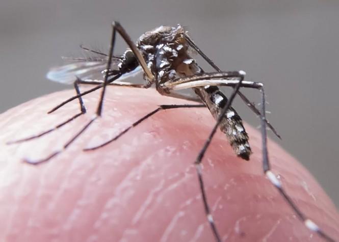Larvicida é utilizado no combate ao Aedes aegypt (FOTO: Creative Commons - CC BY 3.0)