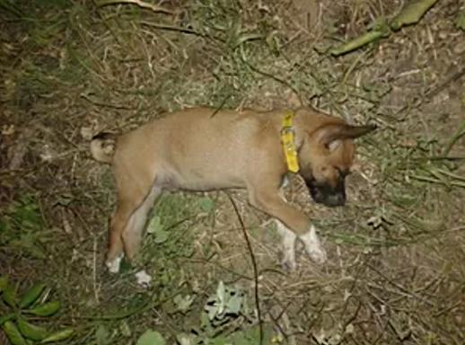 Cachorro de estimação do filho do suspeito foi agredido até a morte (FOTO: Polícia Militar/Divulgação)