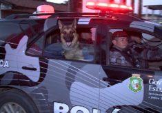 Repórter do Barra acompanha treinamento com cães policiais(FOTO: Reprodução TV Jangadeiro)