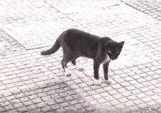 Gatos são adestrados por traficantes de drogas (FOTO: Reprodução TV Jangadeiro)