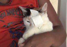 Gatos mutilados em Banabuiú (FOTO: Reprodução TV Jangadeiro)