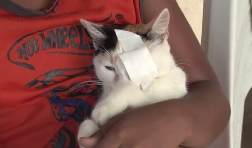 Gatos estão sendo mutilados na cidade de Banabuiú