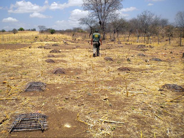 Seca no Ceará aumenta número de caça predatória em todo o estado