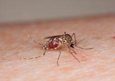 O mosquito foi responsável por 10 mortes no estado este ano. (FOTO: Creative Commons/ U.S. Department of Agriculture)