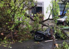 Devido ao tamChuvas em Fortaleza (Fotos: Marco Meireles / TV Jangadeiro)anho da árvore, a queda de apenas uma parte resultou em problemas. (Foto: Marco Meireles / TV Jangadeiro)