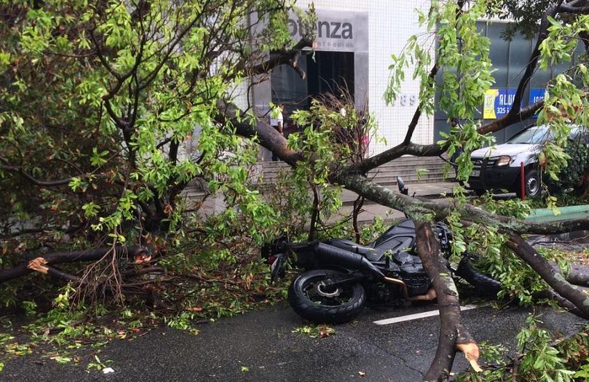 Com chuvas, parte de árvore desaba na Av. Santos Dumont e atinge motoqueiro