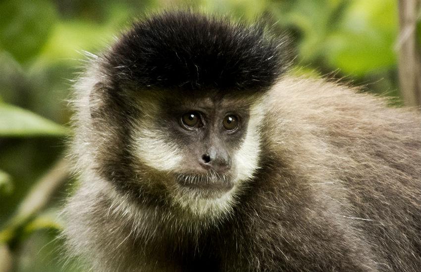 Estudo sobre transmissão da zika entre macacos e humanos será concluído até março
